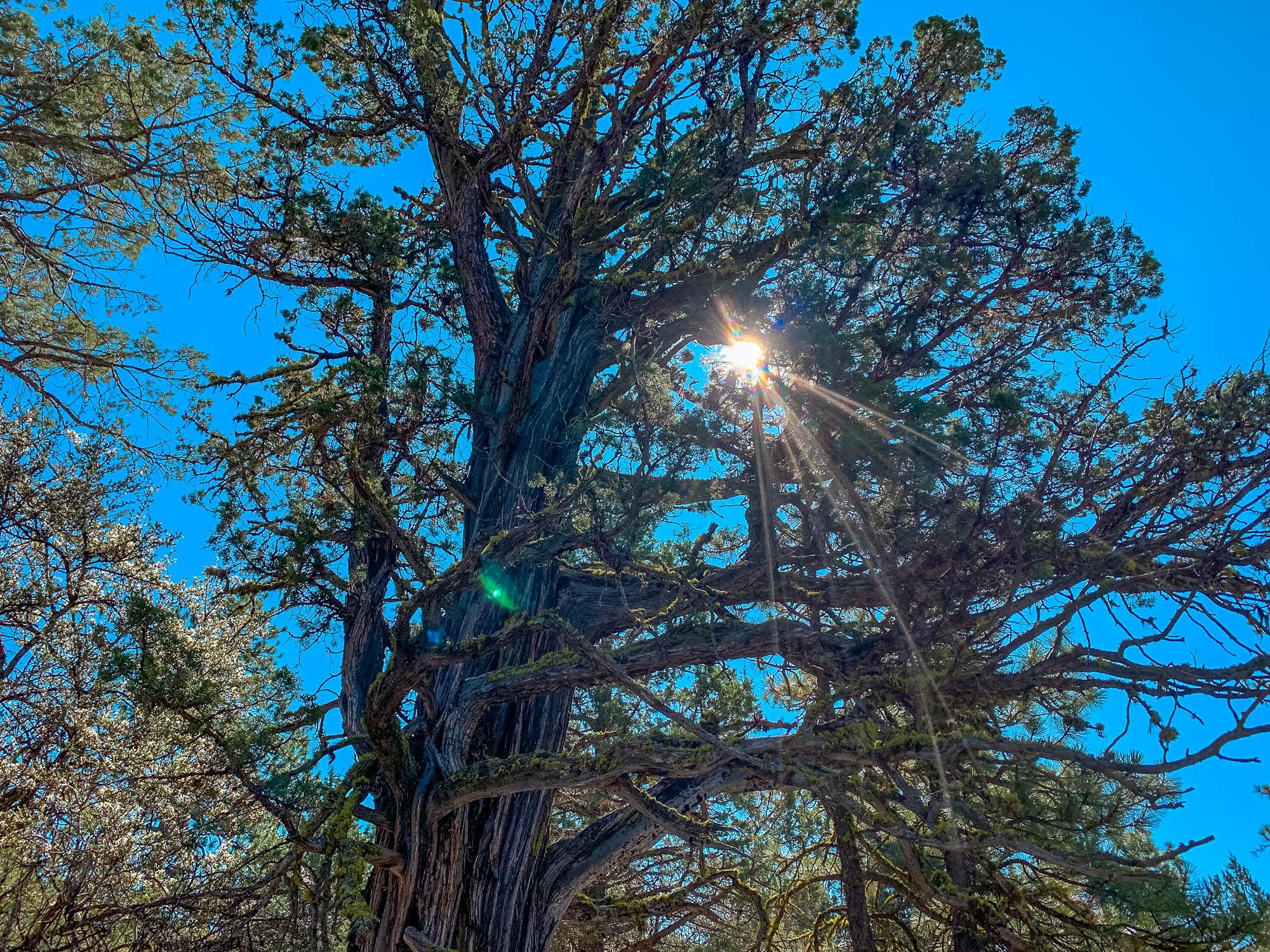 Klamath Falls Forest Estates The Hummingbird Hideaway Landopia