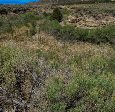 seasonal creek at South border of property