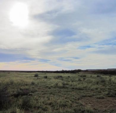 North views