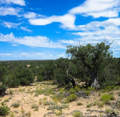 Property Photo NE view