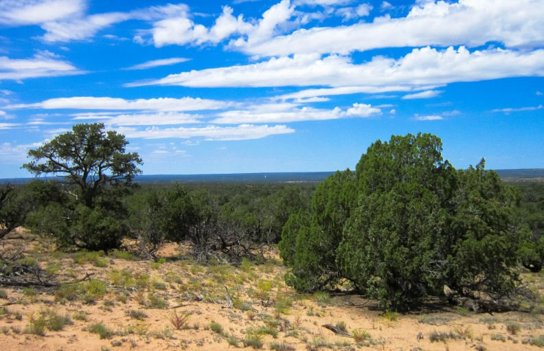 Witch Well Ranches: Your wildest dream in Apache County