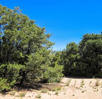Property Pinion Grove
