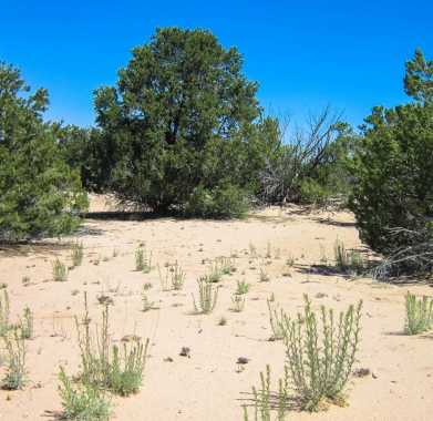 Property  Vegetation